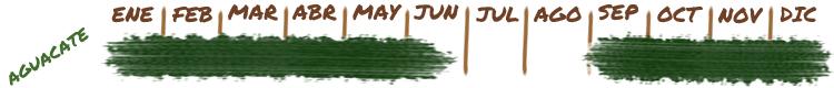 Calendario y temporada de cultivo de aguacate en la Costa Tropical de Granada