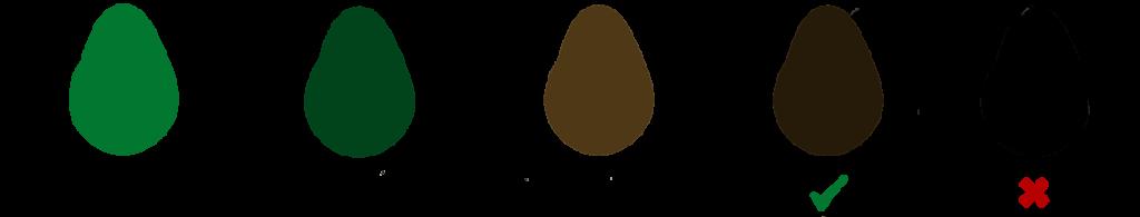 Fases y punto de madurez del aguacate