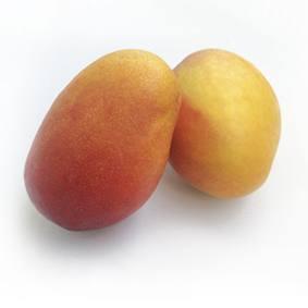 mango irwin maduro de la costa tropical