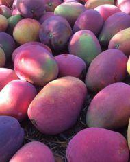 mangos-irwin-recien-recolectados