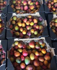 cajas-de-mango-bombon