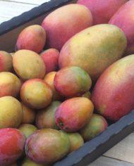 mangos-bombon-mangos-irwin