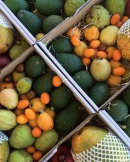 comprar-surtido-de-frutas-tropicales-malaga