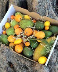 surtido-de-fruta-tropical