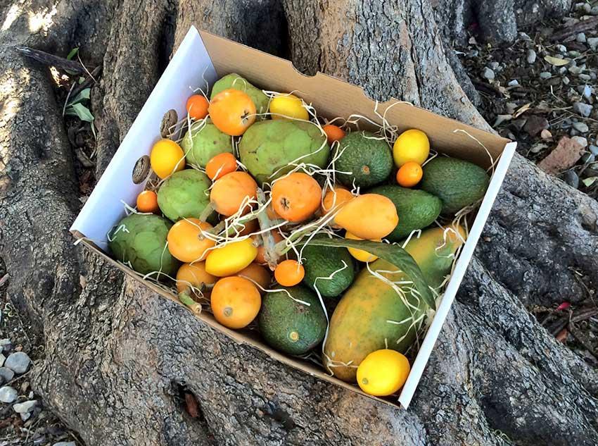 Surtido de frutas tropicales de temporada