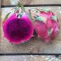 comprar pitahaya morada o fruta del dragon