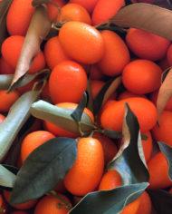 caja-de-kumquats-o-naranjas-chinas