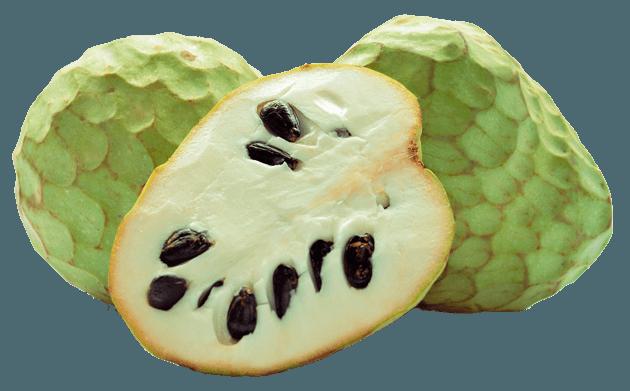 Chirimoya Huerta Tropical