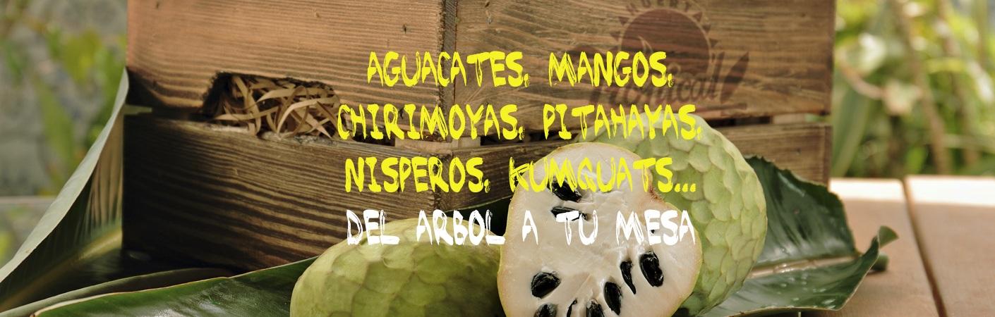 Mangos,aguacates,chirimoyas,nisperos,kumquats,pitahayas